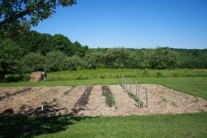Raised Row Lower Garden