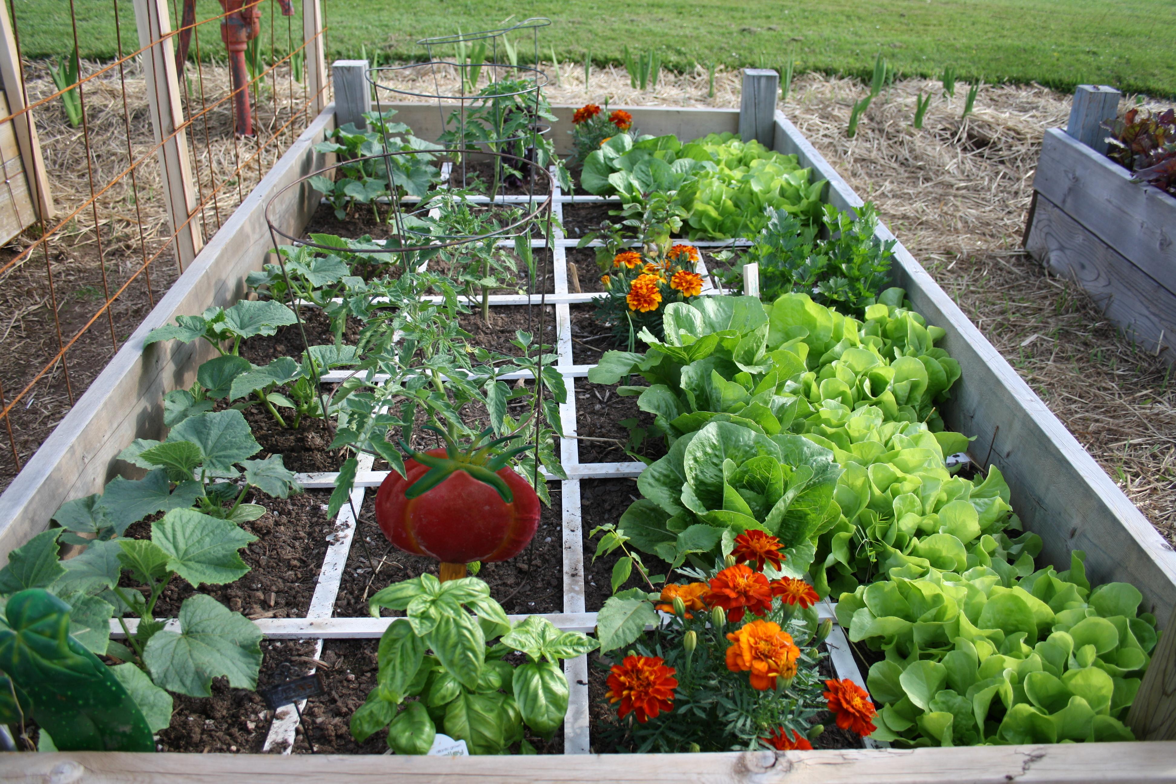 2015 vegetable gardens the creative garden patch for Garden vegetable patch