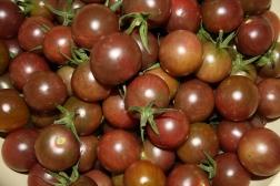 Chocalate Cherry 002